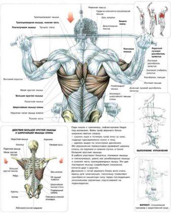 спина и грудь